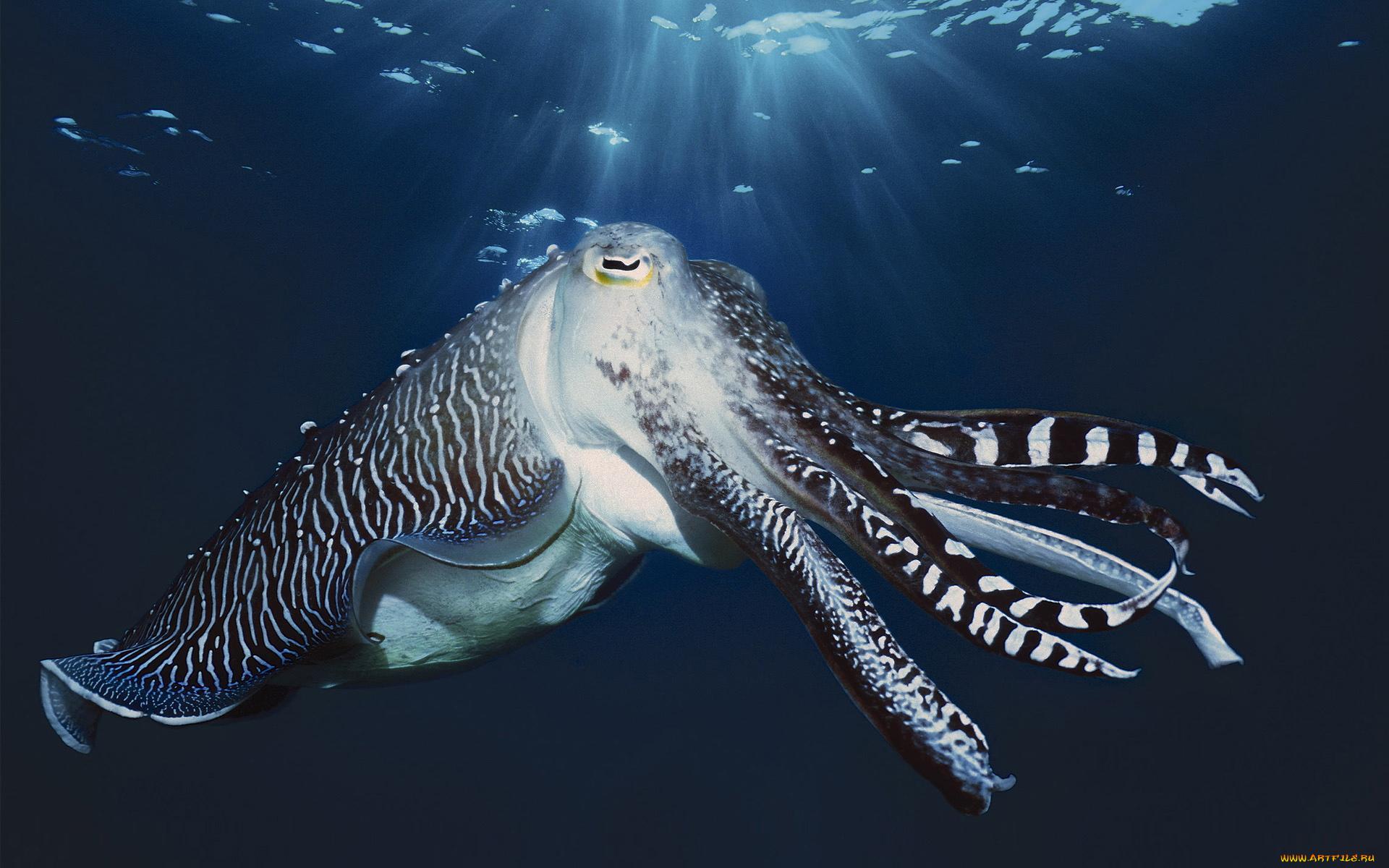 есть обитатели тихого океана только картинки интересна история создания
